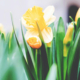 HG Insurance 6 Steps to Springtime Home Preparation and Protection